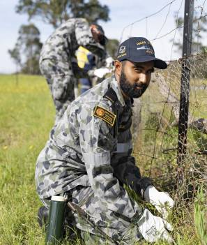 Rebuild effort: NUSHIP Supply crew member Seaman Communication Information Systems Akshay Gomez-Jackson replaces wire fence netting at a Cobargo property. Picture: ABIS Leon Dafonte Fernandez