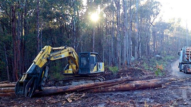 The recent Forestry Corporation NSW logging operation in Tantawangalo State Forest. Picture: David Gallan