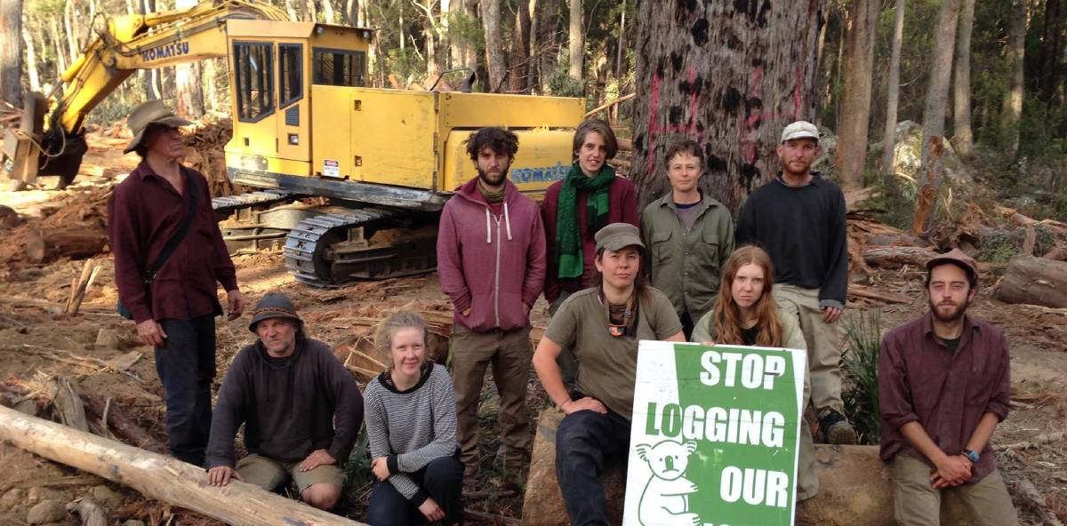 STALLED: Members of South East Forest Rescue (SEFR) prevented Forestry Corporation NSW logging in Tantawangalo State Forest on Tuesday.